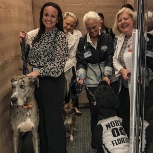 Dogs and trainers in elevator